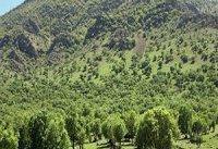 جنگل&#۸۲۰۴;های شمال امسال سند نمی&#۸۲۰۴;گیرد