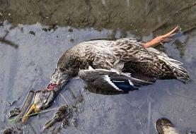 ببینید | فریدونکنار، قتلگاه پرندگان مهاجر