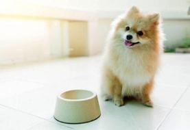 لحظه خنده دار دزدیدن بستنی توسط یک سگ از یخچال