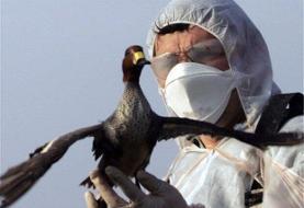خطر شیوع ویروس آنفولانزای فوق حاد پرندگان در اردبیل