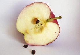 مصرف این خوراکیها باعث مرگ ناگهانی میشوند