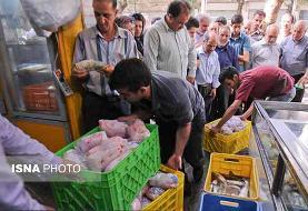 توزیع مرغ گرم  با قیمت ۱۸ هزار و ۵۰۰ تومان در تهران به زودی