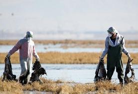 تالاب میقان اراک بسته شد/ پرندگان مهاجر مشکوک به ویروس آنفلوانزا