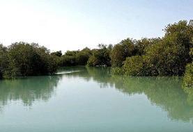 ساختوسازهایی در مجاورت خلیج نایبند/ حامیان محیط زیست نگران هستند
