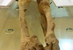 ماجرای عجیب مومیایی زن یزدی؛ جسد خوابیده در موزه کیست؟/ عکس