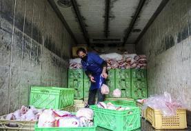قیمت روز مرغ در بازار؛ مرغ ۵ نرخی شد!