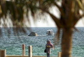 (تصاویر) کشف لاشه یک نهنگ دیگر در ساحل جزیره کیش
