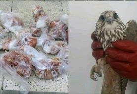 انهدام چهار گروه صیاد حرفهای پرندگان شکاری در تربتجام و جغتای