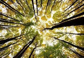 ایدههای درخشان (٢٢): درختان هوشمند