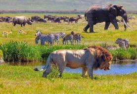 احتمال از بین رفتن یک سوم از گونههای جانوری و گیاهی طی ۵۰ سال