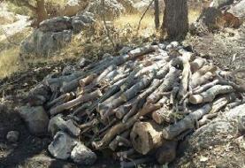 کشف فرآوردههای جنگلی قاچاق در کوهرنگ