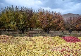 تولید ۱۲۰ هزار تن سیب درختی در کهگیلویه و بویراحمد