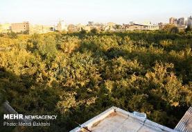 ۸ قطعه باغ و اراضی مشجر طی دو سال تملک شد
