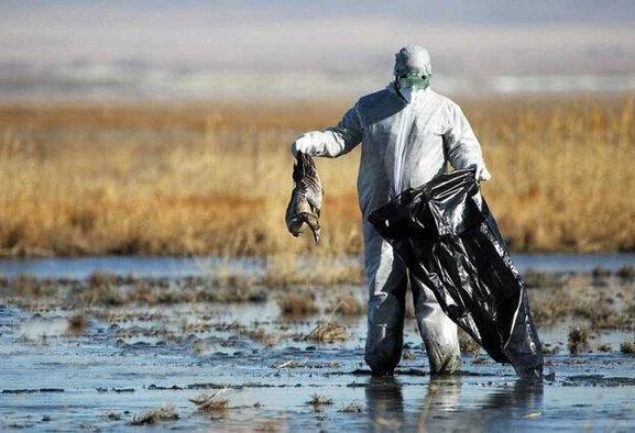 مرگ مشکوک پرندگان این بار در سواحل بندرترکمن