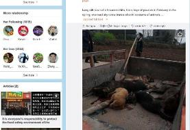 More than 100 wild animals in China died from poisoning in a mass die-off seemingly triggered by ...