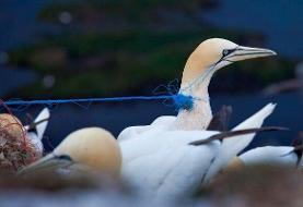 جمعیت ۴۰ درصد پرندگان مهاجر رو به کاهش است | برنامههای جهانی برای حفاظت از از این گونهها