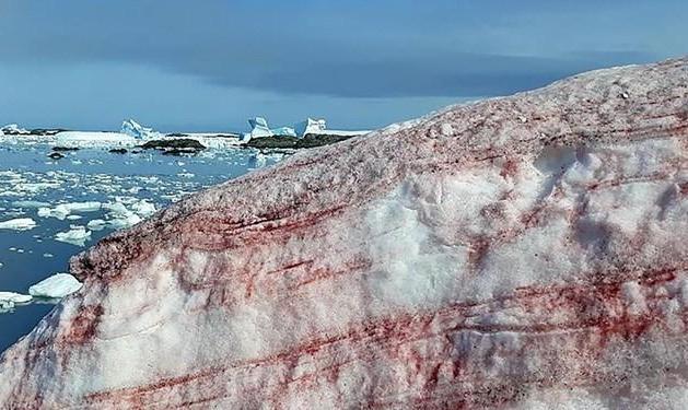برف صورتی در قطب جنوب که در نوع خود بی نظیر است