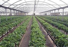 پیشنهاد وزارت جهاد به دولت/احداث گلخانه تغییر کاربری محسوب نشود