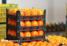 عرضه میوههای سرشار از ویتامین ث در میادین میوه و ترهبار