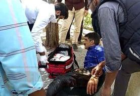 بهبودی مرد میانسال آسیبدیده از حمله گراز در میناب