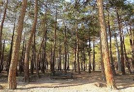 ۲۰ مورد آتش سوزی طی ۶ ماهه اول سال گذشته در پارک جنگلی چیتگر