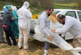 تصاویر خاکسپاریهای متفاوت این روزها | دفن کروناییها توسط طلاب جهادگر