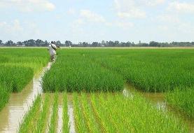 جهش تولید در بخش کشاورزی چگونه محقق می شود؟