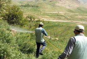 مبارزه با ملخ صحرایی در هرمزگان به ۲۲ هزار هکتار رسید