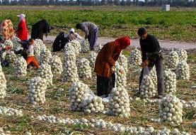 ۲ هزار و ۷۵۰ کشاورز خدمات صندوق بیمه اجتماعی دریافت کردند