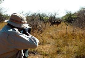 شکارچیان گراز به زودی دستگیر می شوند
