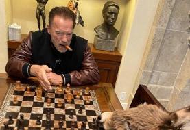 (تصویر) بازی کاسپاروف با برنده مسابقه آرنولد و الاغش!