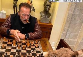 ببینید | شطرنج بازی کردن آرنولد با الاغش