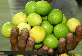 بازار لیموترش و لیموشیرین آرام میگیرد؟