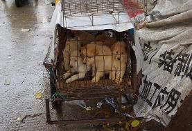 کرونا به داد جانوران رسید: خوردن گوشت سگ و گربه در چین ممنوع شد!