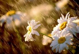 بارش پراکنده و وزش باد برای چند استان در آخر هفته