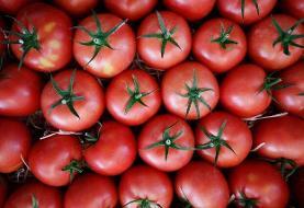 کاهش قیمت جهانی مواد غذایی رکورد زد