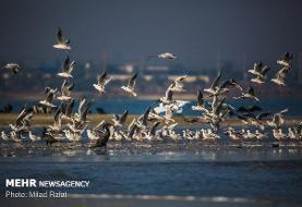 افزایش جمعیت پرندگان مهاجر در خوزستان