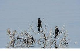 باران تالابهای خوزستان را احیا کرد | افزایش جمعیت پرندگان مهاجر در ...