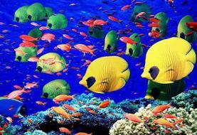 هشدار | تعادل اکولوژیک زیستبوم دریای عمان در معرض تهدید است