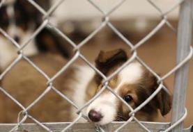 ساخت پناهگاه حیوانان بدون صاحب در یزد
