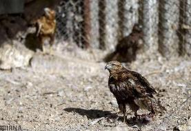 ۳ گونه پرنده در باغ وحش ارم تهران تلف شد