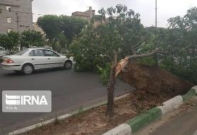 طوفان برق ۱۶ نقطه استان کرمانشاه را قطع کرد