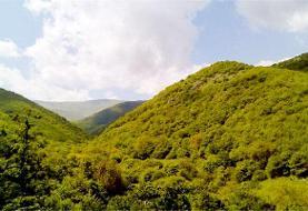 گردشگر؛ چالش جدید جنگلهای شمال