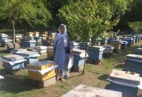 سالانه ۴۳۰ تن عسل در رضوانشهر تولید میشود
