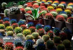۱۲ نکته برای نگهداری از گل و گیاه آپارتمانی