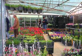 بازار گل محلاتی منتقل می شود