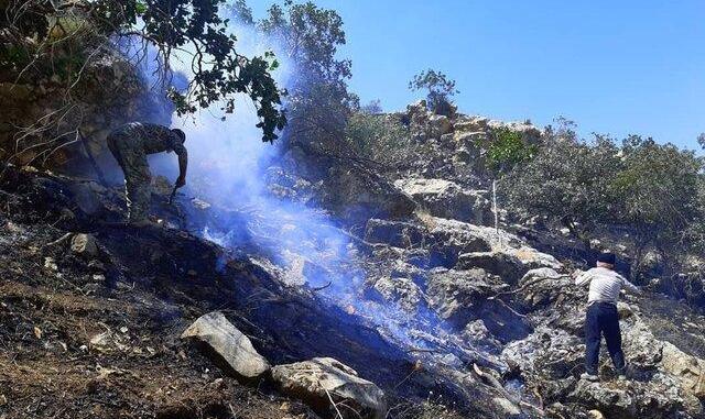 آتش سهلانگاری به جنگلهای  یزد و بوشهر هم رسید