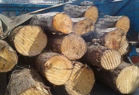 قاچاقچی چوب مامور محیط زیست را با خودرو زیر گرفت