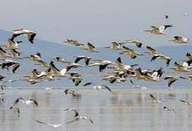بهشت پرندگان مهاجر در ایران را بشناسید