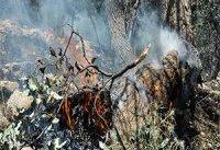 وقوع آتش&#۸۲۰۴;سوزی،آخرین میخ بر تابوت رویشگاه&#۸۲۰۴;های زاگرس